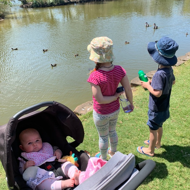 The kids enjoyed the ducks at Gympie. It got a bit exciting when a eel was spotted.